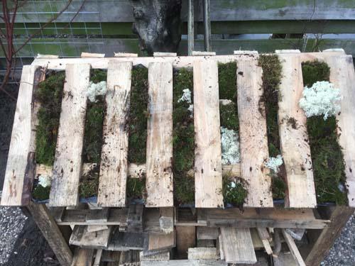 Pallet houtopslag met mosdak eindresultaat