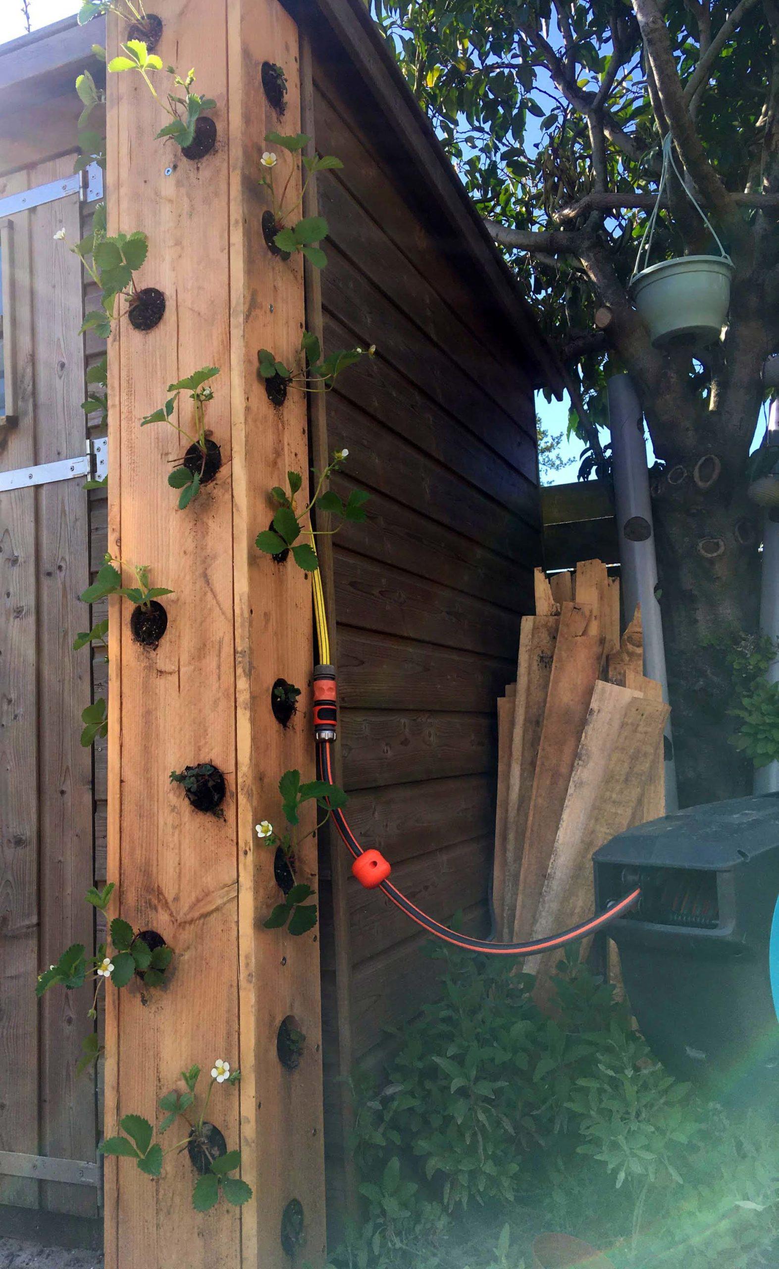DIY aardbeientoren aangesloten tuinslang
